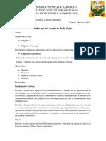 Informe Del Sombrío de La Soja- Cabezas