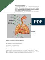 Función de Las Estructuras Del Sistema Respiratorio