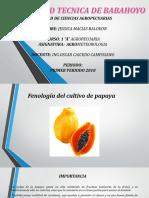 Diapositiva La Fenologia de La Papaya