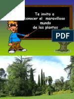 lasplantas-160101145500.pdf