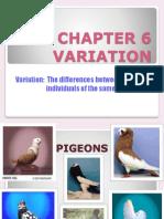 variation.pptx