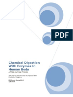 Chemical Digestion With Enzymes in Human Body Word 97-2003