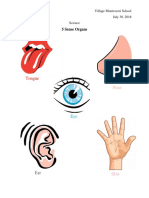 5 Sense Organs