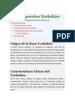 Raza Porcina Yorkshire