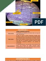 Corazón y Respiratorio-laminas de Microscopio Explicadas