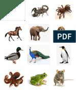 animales imagenes.docx