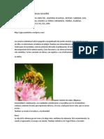 Manual de Signos y Símbolos en Sueños, Nahual, Animal de Poder y Totems