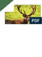 erdei állatok.docx