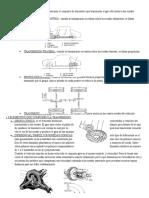 diferencial corona.docx