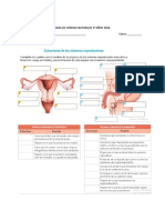 Guia Del Sistema Reproductor Femenino y Masculino