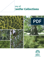 Global Survey of Ex Situ Conifer Collections