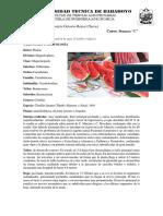 Morfologia y TAXONOMIA Sandia