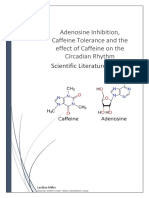 Adenosine Inhibition, Caffeine Tolerance and the effect of Caffeine on the Circadian Rhythm