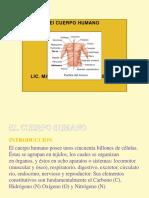 El Cuerpo Humano (1) [Reparado]