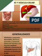 Histologia Hepatica