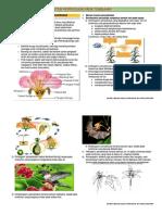 reproduksi generatif angiospermae