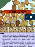 Bacterias PGR.ppt [Autoguardado]