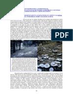 1-SETAS COMESTIBLES.pdf