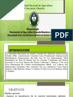 Exposicion Fitopatologia Ralstonia