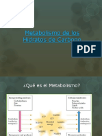 metabolismo hidratos de carbono