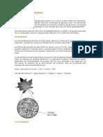 Lectura El Proceso de Fotosintesis