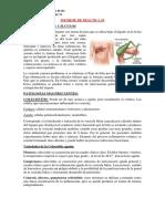 Informe 3 Vesícula