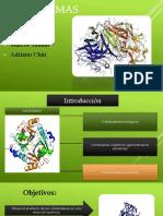 Las enzimas.pptx