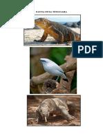 Fauna Nusa Tenggara