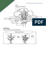 Struktur Dan Fungsi Bahagian Bunga