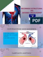 Arterias y Venas Corporales