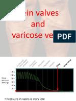 Vein Valves and Varicose Veins