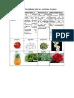 clasificacindelasplantassegnsuutilidad-140709112053-phpapp02