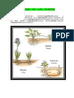 NUTRICION    DE    LAS    PLANTAS.docx