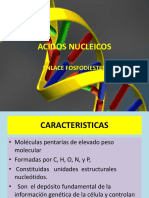 ACIDOS NUCLEICOS CEPRUNSA 2017.pptx