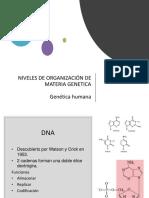 Niveles de Organización Genética