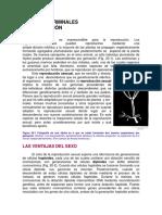 Células germinales y fecundación.pdf