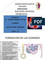 Embriologia Genital Femenina