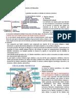 Reproductor Masculino (Histología y Anatomía)