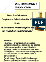 CO 16 Glandulas Endocrinas