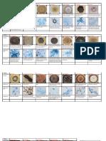 Mycology-Images.pdf