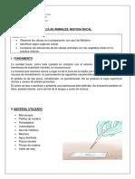 Observar Células Mucosa Bucal