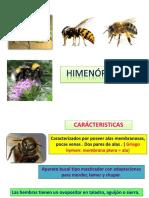 himenopterosfinal2-141216204059-conversion-gate02.pdf