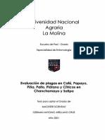 Evaluación de plagas en Café, Papayo, Piña, Palto, Plátano y Cítricos en Chanchamayo y Satipo