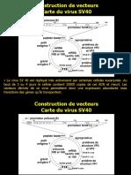 Cours Genie Genetique L3 Partie4