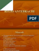 Regio Antebrachi.ppt