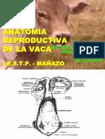 Anatomia y Tecnica de La i.a.