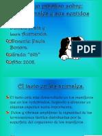 LOS ANIMALES Y SUS SENTIDOS