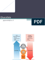 Ayudantia 9 - Gluconeogénesis, ciclo de kreebs y cadena de transporte de electrones.pptx