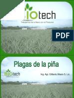 Biblioteca_282_Plagas de La Piña