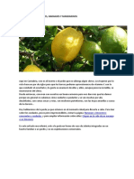 Poda de Limonero, Naranjo y Mandarino